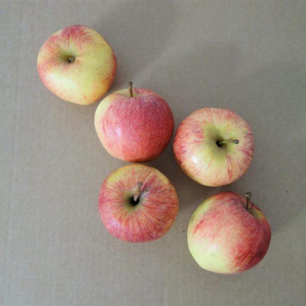 Gala apples (2)