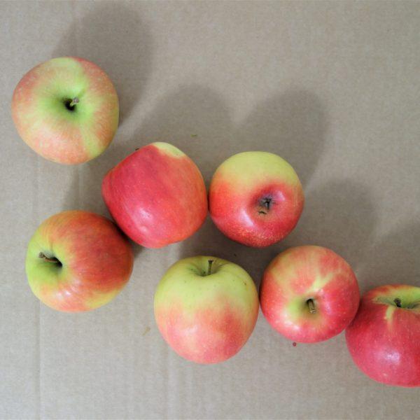 Pink Kiss apples