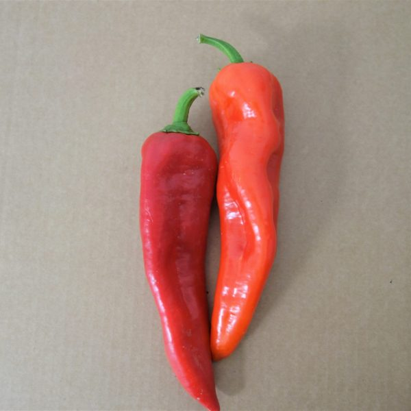 Red snack pepper