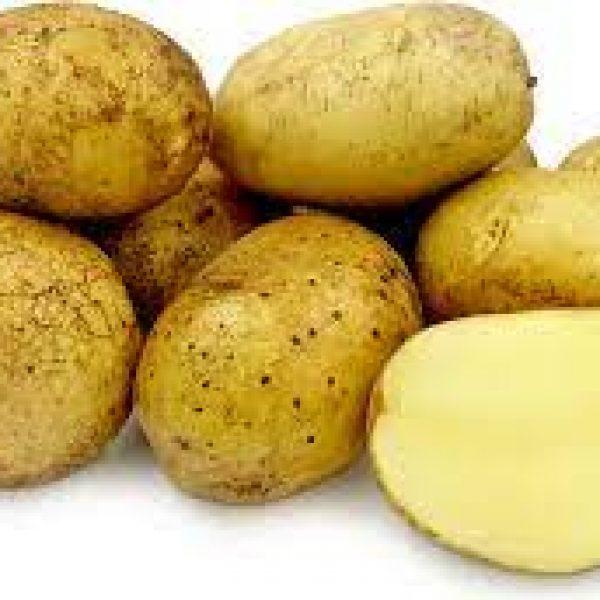agria potato