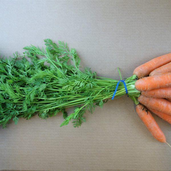 carrots w top