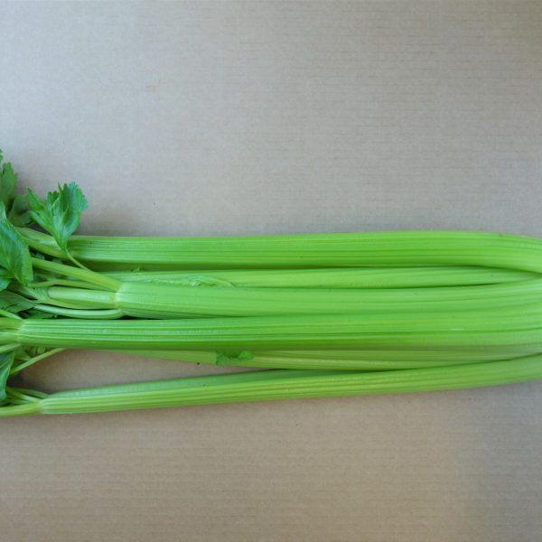 celery (2)